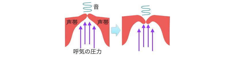 呼気の圧力による声帯が振動する様子。