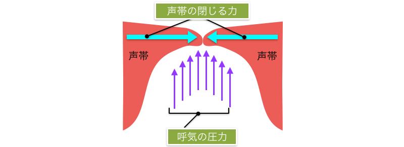 声量は、呼気の圧力、声帯の閉じる力、によって決まります。